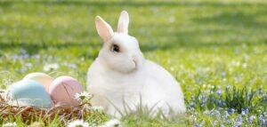 """Suchst du einem passendem Ostergeschenk? Schenke dieses Jahr Wunscherfüllung statt Ostereier! Mit der DMH®–Methode """"Deine Essenz des Glücks""""!"""
